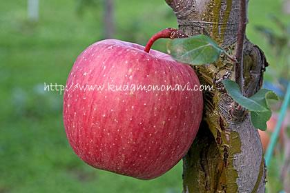 リンゴの画像 p1_17
