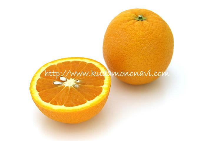 オレンジ ネーブル 果樹園「花育通販」蜜柑(みかん)ネーブルオレンジの苗木を販売