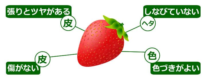 http://www.kudamononavi.com/img/zukan/miwakejpg/miwake_strawberry.jpg